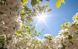 vesna-tsvety-solntse-nebo-krasota